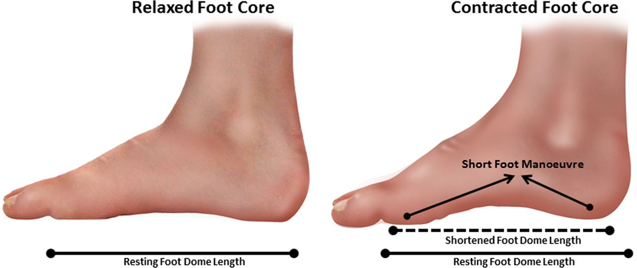 The difference between a relaxed and contracted foot core - SoleScience